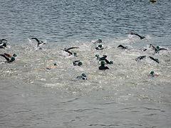 Waldecker Edersee-Triathlon 2008 - 9